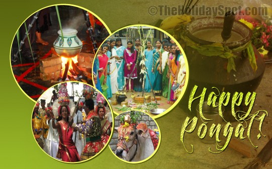 Pongal Celebrations - Wallpapers From TheHolidaySpot