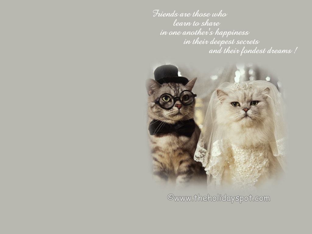 Quotes About Cats And Friendship 800X600