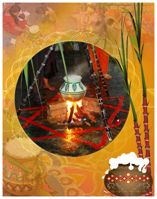 Pongal festival history wallpapers greeting cards pongal celebrations m4hsunfo