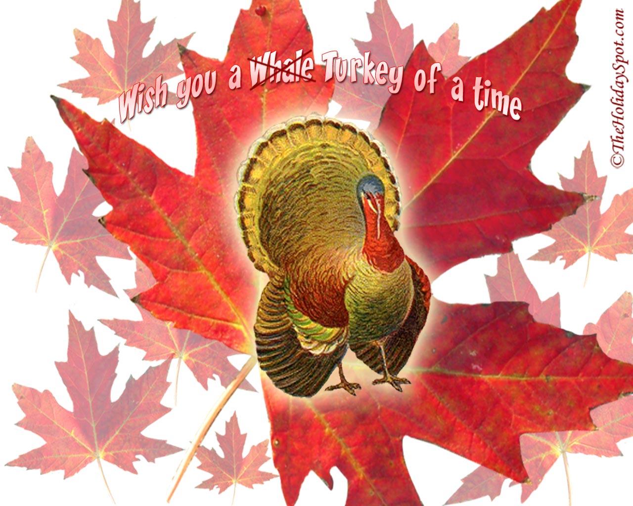 desktop wallpaper of thanksgiving turkeys