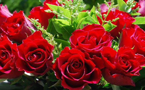 valentine's day flowers  meanings of different colors of roses, Beautiful flower