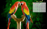 July 2021 Calendar Wallpaper