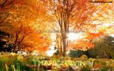 Thanksgiving-04