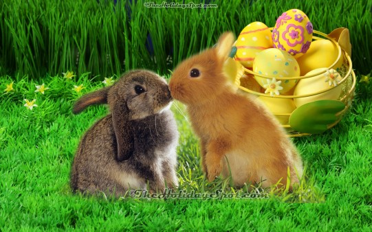 Easter Bunny Wallpapers From Theholidayspot